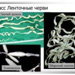 соревнования по бегу на призы Людмилы Брагиной